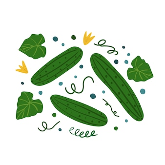 Cucumbers and leaves. hand draw vegetable print.