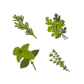 Кулинарные травы общие ароматные кулинарные травы