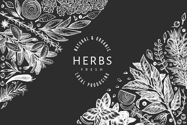Culinary herbs banner template. hand drawn vintage botanical illustration on chalk board. engraved style. vintage food background.