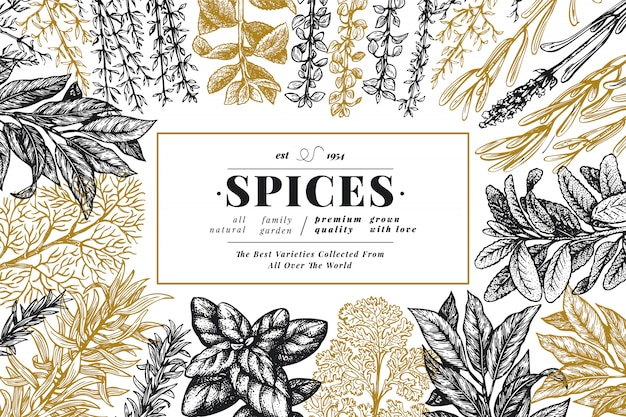 Culinary herbs and spices background. hand drawn retro botanical illustration.