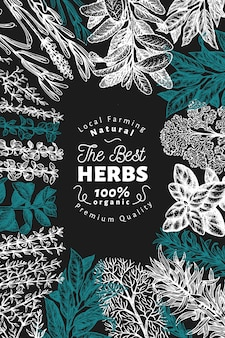 Culinary herbs and spices banner template.