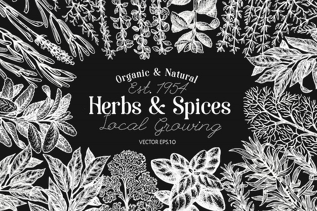 Culinary herbs and spices  template.