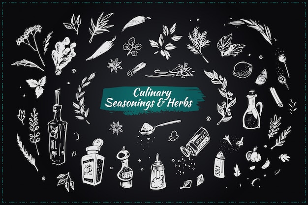 Culinary seasonings and herbs. hand drawn icons