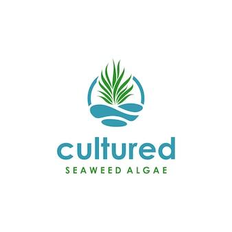 양식된 해조류 심볼 로고 디자인