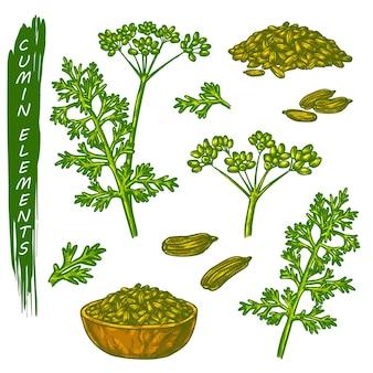 Элементы эскиза тмина, специи или кулинарные приправы. рисованной иконки органических естественных растений.