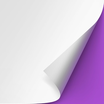 Curled corner of white paper on purple background