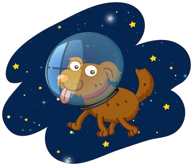 A cut dog in space