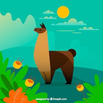 Sfondo carino alpaca in natura