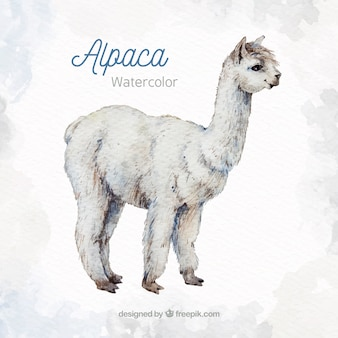 Cute alpaca background in watercolor style