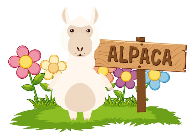 Cute alpaca in garden