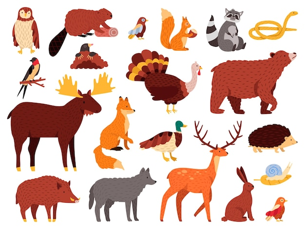 Cute animals. cartoon forest animals, bear raccoon fox and cute owl, hand drawn mammals and birds, fall wood fauna  illustration icons set. bear and owl, wild fox and rabbit