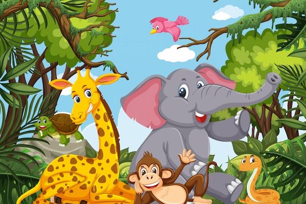 Милые животные в джунглях