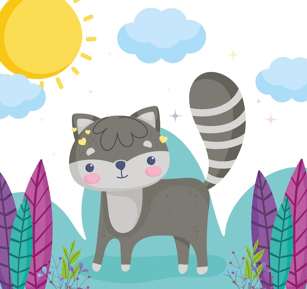Cute animals, little raccoon grass plants leaves sunny day