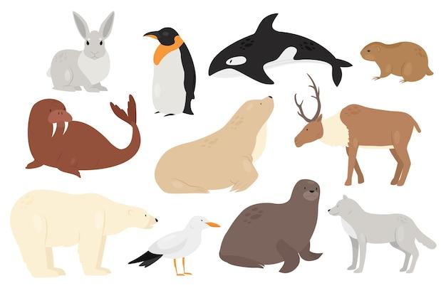 Cute arctic antarctica animals and birds set white polar bear wolf penguin orca seal