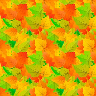 Cute autumn leaves from different kind of trees