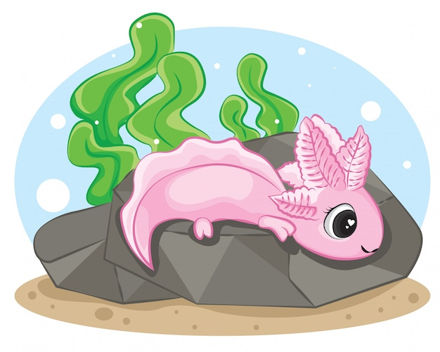 Cute axolotl on the rock in the water. isolated background.