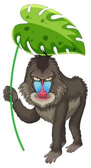 Милый бабуин держит зеленый лист на белом фоне