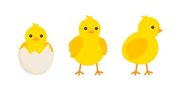 イースターのデザインのためにさまざまなポーズで設定されたかわいい赤ちゃんの鶏小さな黄色のひよこ