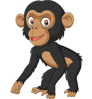 Cute baby chimpanzee cartoon on white background
