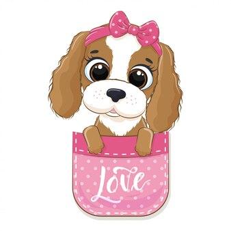 Милый ребенок собака в кармане.