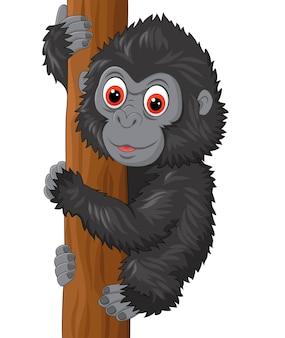 Cute baby gorilla climbing tree