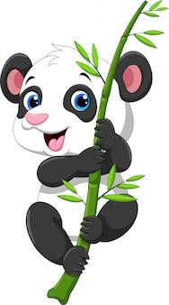 Cute baby panda hanging on a bamboo tree