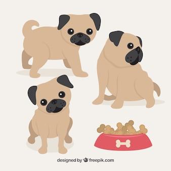Cute baby pug dogs
