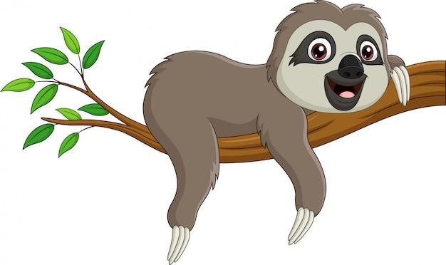 Милый ребенок ленивец на ветке дерева