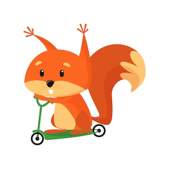 Cute baby squirrel riding scooter