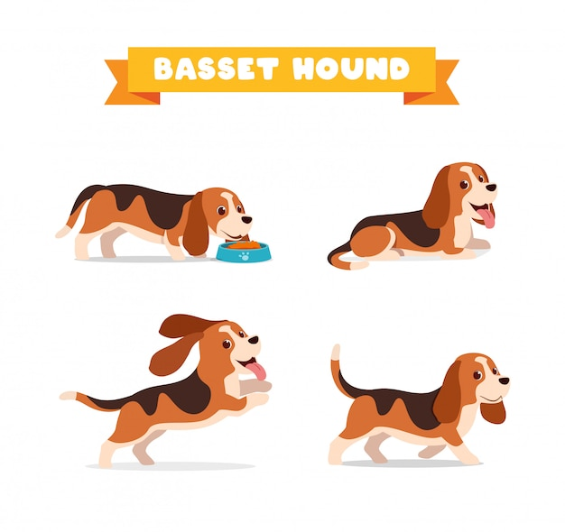 Cute basset hound dog animal pet with many pose bundle set