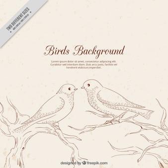 Cute birds background