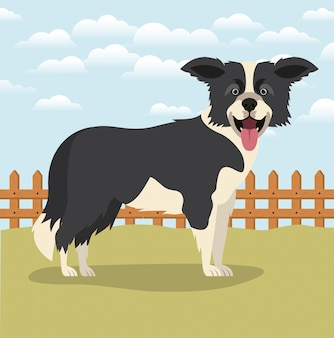 Cute border collie dog pet in the camp