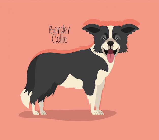Cute border collie dog pet character
