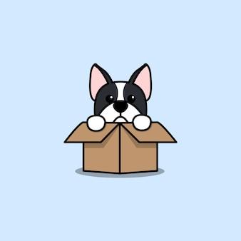 Cute boston terrier dog in the box cartoon icon