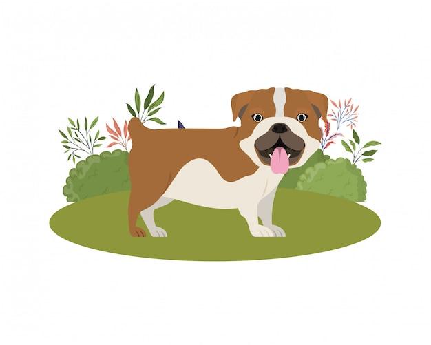 白地にかわいいブルドッグingles犬