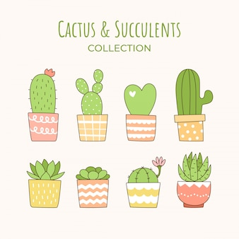 Cute cactus and succulent collection.