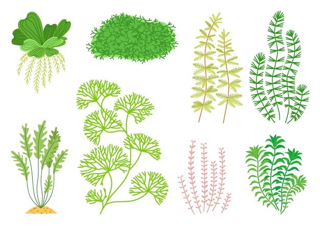 Cute cartoon aquarium seaweeds set