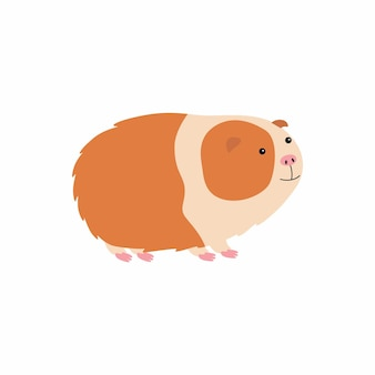 Cute cartoon guinea pig. vector illustration isolated on white background. Premium Vector