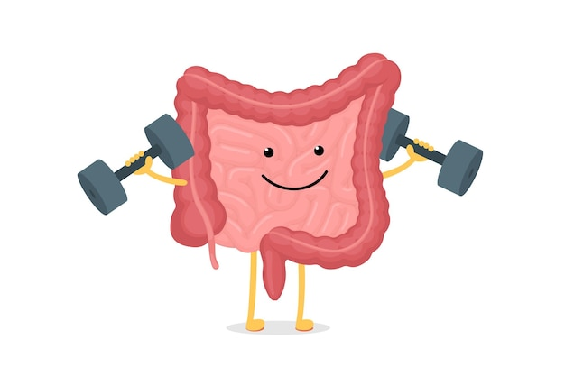 Cute cartoon healthy intestines character with dumbbells abdominal cavity digestive and excretion