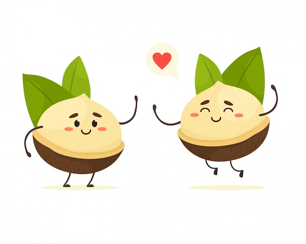 Cute cartoon macadamia nuts with leaves.  nuts isolate in cartoon flat style. white background