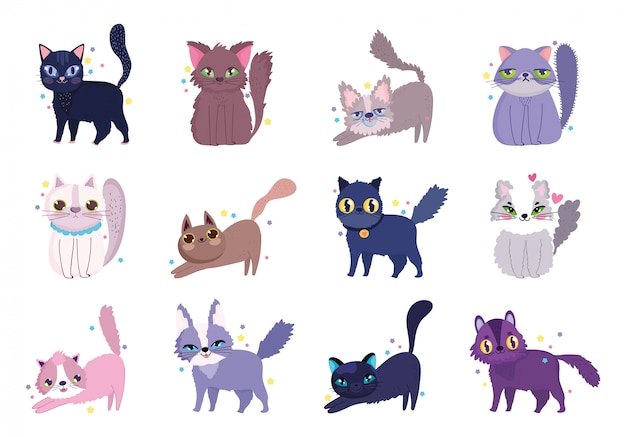 Cute cat different breeds domestic cartoon animal