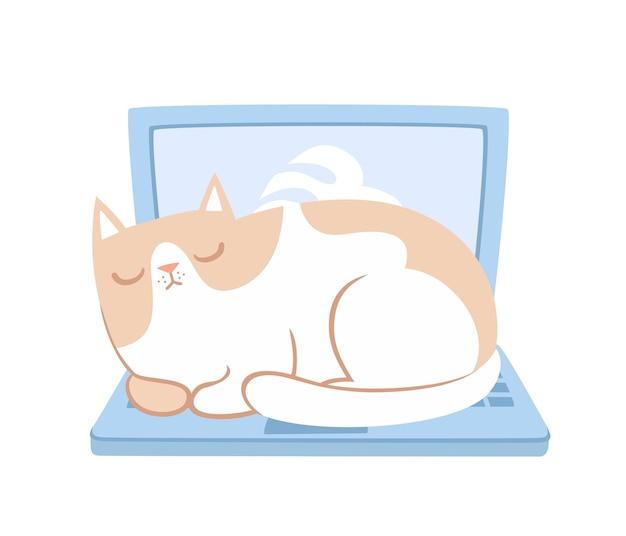 分離されたラップトップに横たわっているかわいい猫
