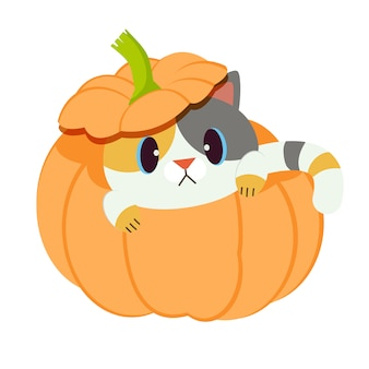 The cute cat with the pumpkin.