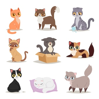 Cute cats character different pose