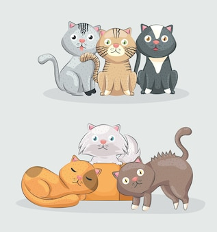 Cute cats group