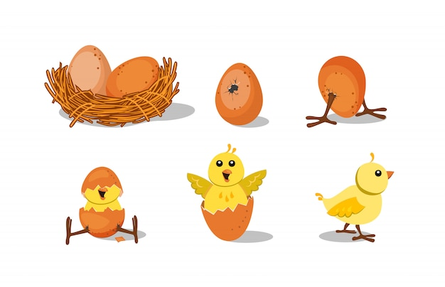 Cute chick hatching set