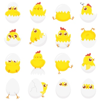 Cute chicken in egg, easter baby chick, newborn chickens in eggshell and farm kids chicks isolated cartoon  set