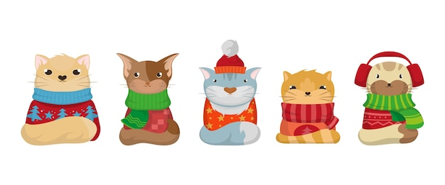 セーターとかわいいクリスマス猫