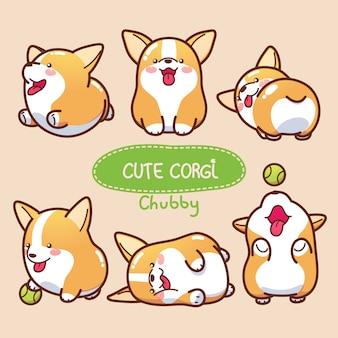 Cute and chubby corgi collection