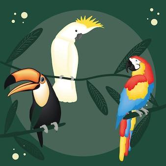 녹색 배경에 귀여운 앵무새 큰부리새와 잉 꼬 만화